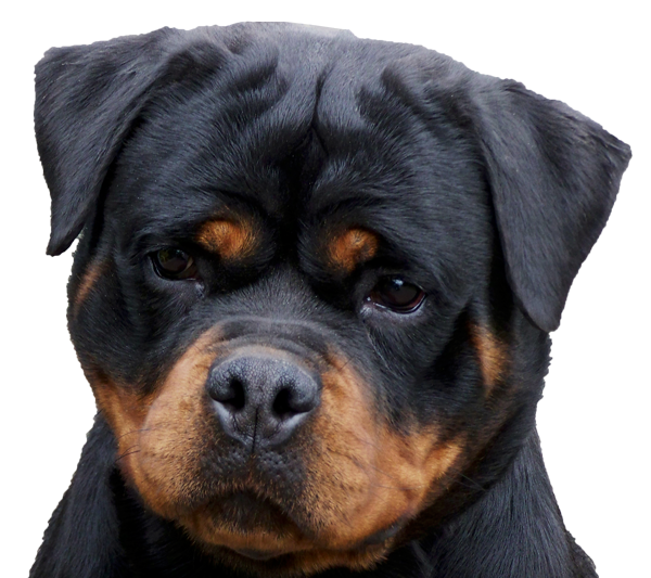 Good Dog Foods For Rotweilers